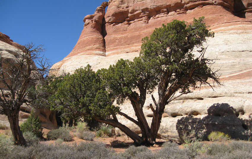 pine city trail
