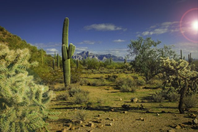 arizona-landscape